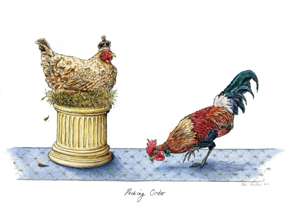 An original picture of a hen wearing a crown looking down on the other hen who is pecking at the blue carpet on a white background
