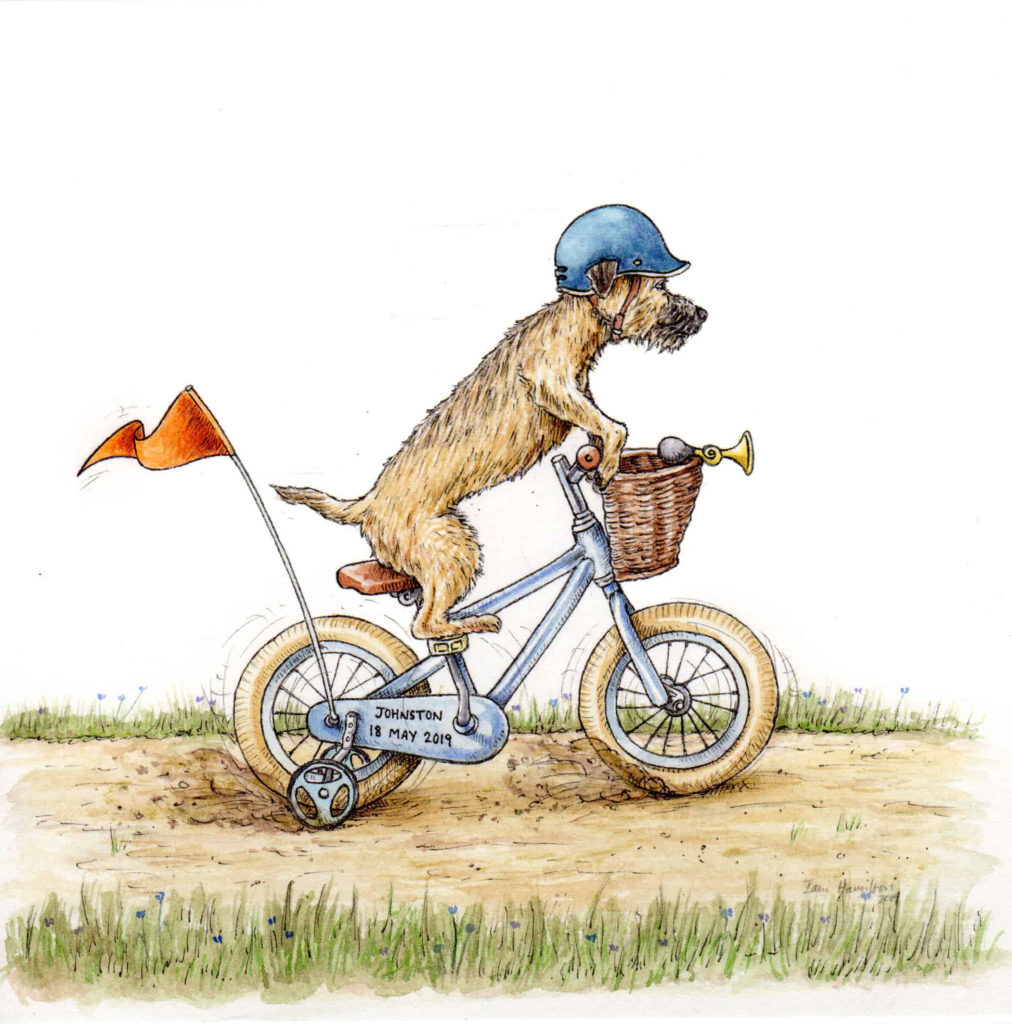 A commissioned original picture of a border terrier riding his bike on a track on a white background