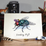 Greetings card of a fly wearing a purple and yellow cap on a wooden table