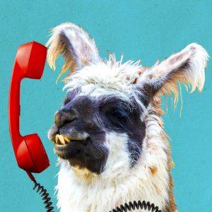 alpaca on phone
